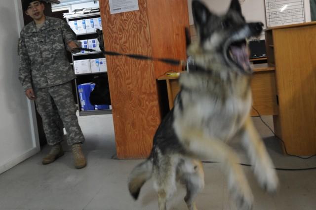 Eighth Army gets ready for Key Resolve/Foal Eagle