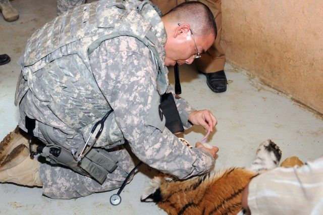 Checking a Tiger's mouth