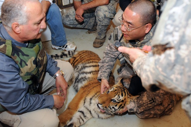 Tiger Check up