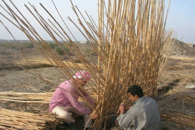 "Local contractors construct the inner walls of a marsh Arab mudhif. The reeds are gathered from marshlands near the Euphrates River. The house is a blend of adobe and reed building materials used frequently by marsh Arabs in southeast Iraq. Construction of the ""model"" adobe house was coordinated with Task Force Pathfinder and the Dhi Qar Provincial Reconstruction Team."