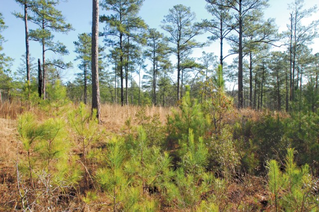 Over the next 15 to 18 months, Fort Benning, Ga., will conduct environmental and real estate studies to determine if there is any land suitable for its training needs. The study is expected to conclude in October 2011.