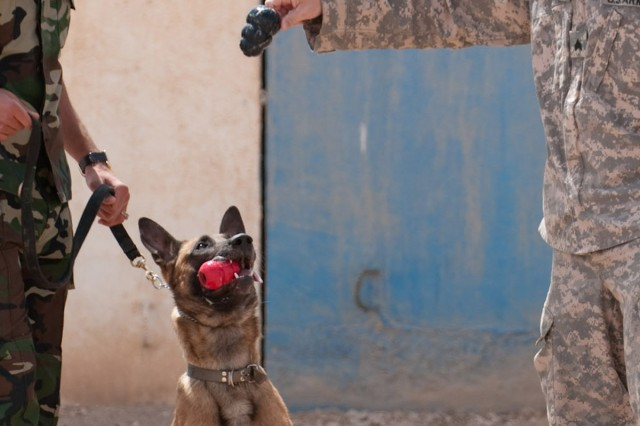 Mahmoud Ismail Husain, a dog handler with the Iraqi Police Al Anbar K-9 unit in Ramadi, Iraq, gets help from Sgt. Nicholas Arnold, a military police dog handler attached to 1st Brigade Special Troops Battalion, 1st Advise and Assist Brigade, 82nd Airborne Division, while training his explosives-finding Belgian malinois, April 16.