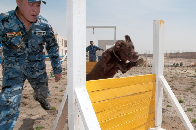 A dog handler with the Iraqi Police Al Anbar, Iraq, K-9 unit in Ramadi, runs his dog, Sassy, a chocolate Labrador retriever, through an obstacle course during training, April 16.