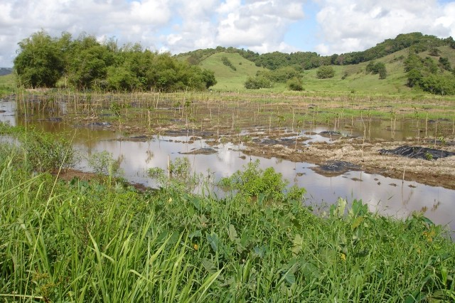 In keeping with its commitment to ensure that environmental impacts to aquatic resources from its projects are avoided, minimized or mitigated, the U.S. Army Corps of Engineers, Jacksonville District, has created a four-acre wetland in Humacao, Puerto Rico.