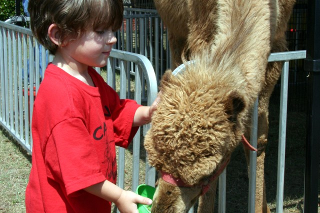 Carlos Rodriguez, 2, pets a Dromedary Camel at Hunter's petting zoo during the Month of the Military Child carnival/picnic at the Child Development Center , April 30.