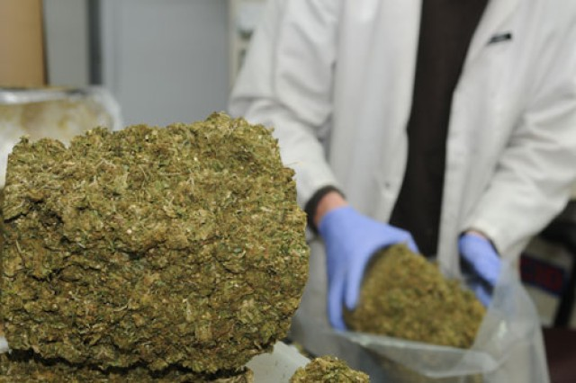 Jason Nawin, a forensic drug chemist at the U.S. Army Criminal Investigation Laboratory, processes and prepares to test about 100 pounds of marijuana CID seized as evidence.