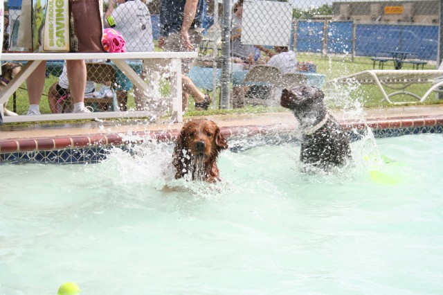 All shapes, sizes, colors and breeds of two- and four-legged critters cooled off at the Fort Sam Houston Aquatic Center May 22.