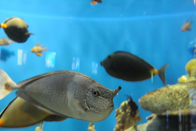 The Sea World aquarium is home to an array of fish and other water life.