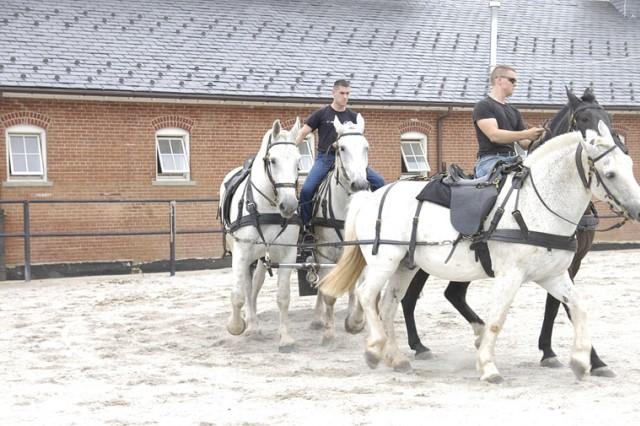Training Caisson horses