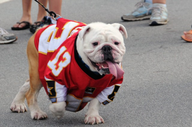 """""""Rocky"""" wears his Army football jersey as he participates in the 4th IBCT """"Yellow Ribbon Walk,"""" Aug. 14. Rocky's owner, Traci Wheeler, 4th IBCT spouse and Family Readiness Support Assistance leader, brought along Rocky for the"""