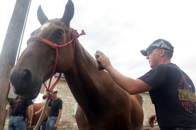 Quarter horse General Dinges gets primped by Spc. Kyle Sheridan before his retirement from the Fort Sill Field Artillery Half Section Aug. 17 at the stables off Randolph Road on Fort Sill. Dinges, a former racehorse, served 21 years with the ceremonial unit.