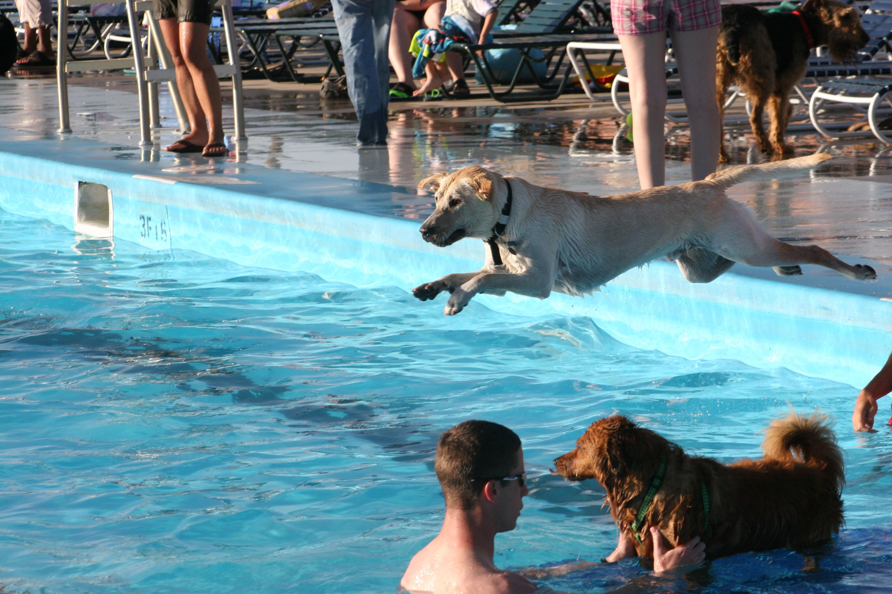 Carson outdoor pool goes to the dogs article the for Garden pool for dogs
