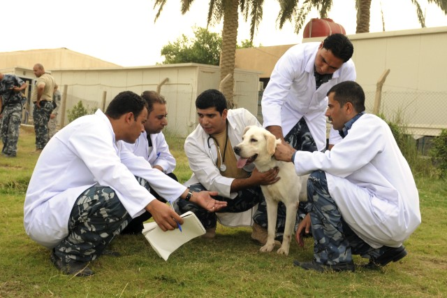 BAGHDAD — Veterinarians, veterinarian technicians and Iraqi Police interact with an explosive detection dog at the Baghdad Police College Oct. 6. Students in the Iraqi Police Canine Program and Canine Handlers School monitor their explosive-detection dogs around the clock to provide instructors with daily health assessments.