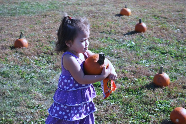 Kaia Seeley, 2, holds her pumpkin tight at the EFMP Pumpkin Patch Oct. 16. The field building the ACS building was dotted with more than 160 pumpkins for children to pick for Halloween.