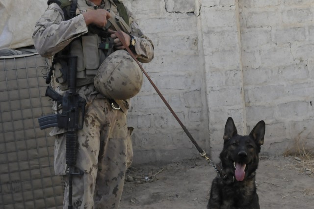 American K-9 Detection Services in Afghanistan 1