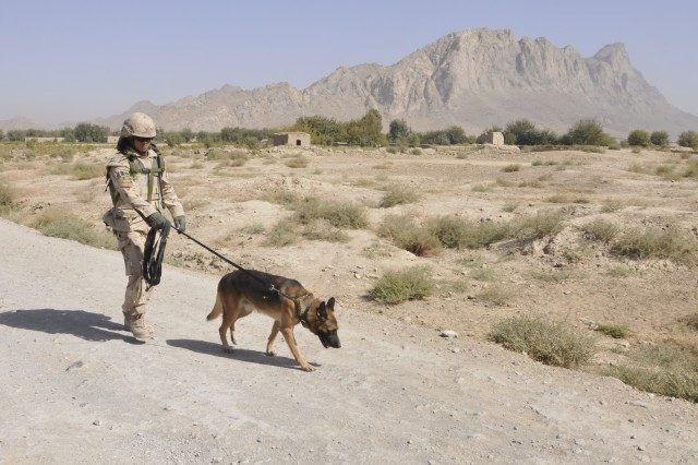 American K-9 Detection Services (AMK9) dog handler Ambar Limbu, a Panchkhal, Nepal native and his Explosive Detector Dog, Tinus, lead a partnered dismounted patrol through a Panjwai'i district in Kandahar with the Afghan National Army and Canadian forces Oct 8. The use of EDDs have increased due to the use of explosives used against both civilian and military personnel. EDD teams patrol military installations, assist in vehicle checkpoints and help find buried explosive devices.