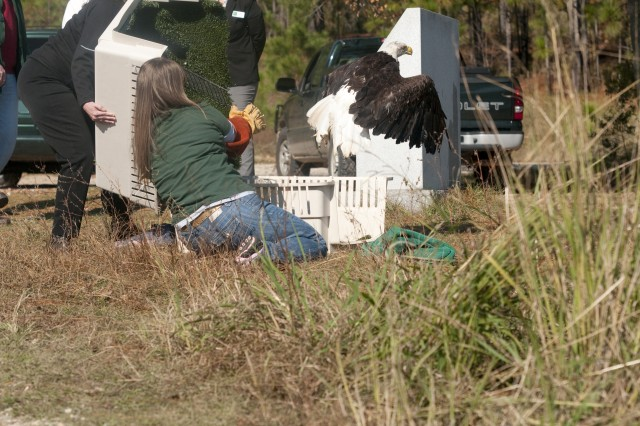 Rehabilitated bird released into wild at Fort Bragg