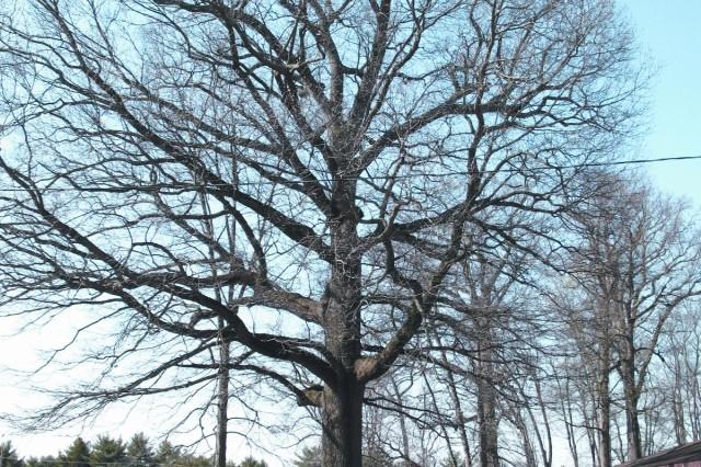 Sacrificing a tree for long term gain