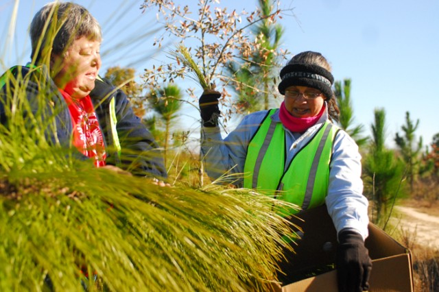 Sharon Miller and Nita Battise, members of the Alabama-Coushatta Tribe of Texas, harvest pine needles Wednesday at a training compartment on Fort Benning.