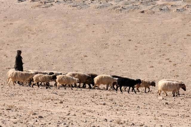 """TANGI VALLEY, Afghanistan - An Afghan farmer from the Tangi Valley herds sheep yards away from Afghan National Army and Australian soldiers from the Afghan mentoring team Dec. 28, 2010. (Photo by Spc. Jonathan Thomas, 16th Mobile Public Affairs Detachment.)"""""""