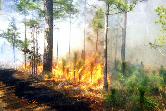 Fort Benning's Land Management Branch conducts controlled burns in post training areas between December and June every year. Officials say it's a vital tool in reducing the threat of potentially catastrophic wildfires.