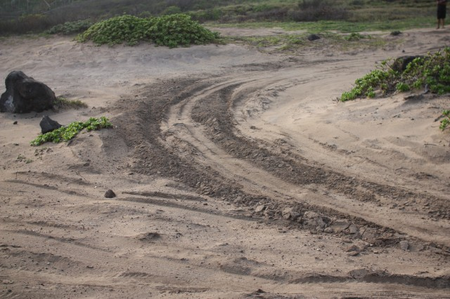 KAENA POINT STATE PARK, Hawaii - Off-roading damage to Kaena Point's vegetation and wildlife is creating concern for state officials, community members and the military community alike.