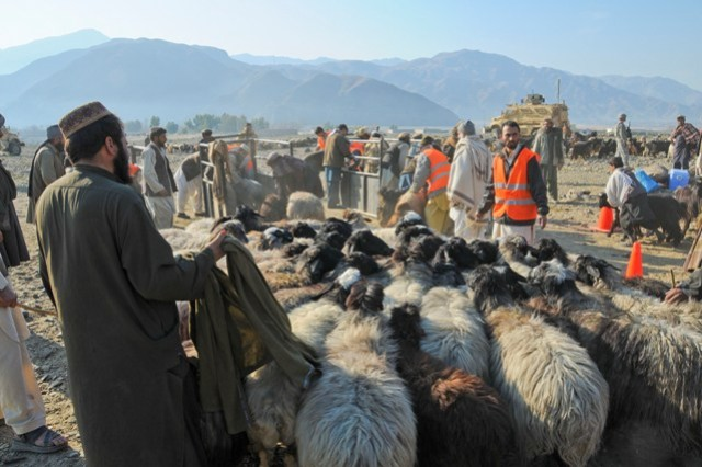Kuchi tribesman and Afghan veterinary workers herd sheep toward the chutes where the animals were de-wormed and vaccinated as part of a veterinary outreach sustainment program for the nomadic Kuchi tribesman camped in the Noor Gal district, Jan. 8.