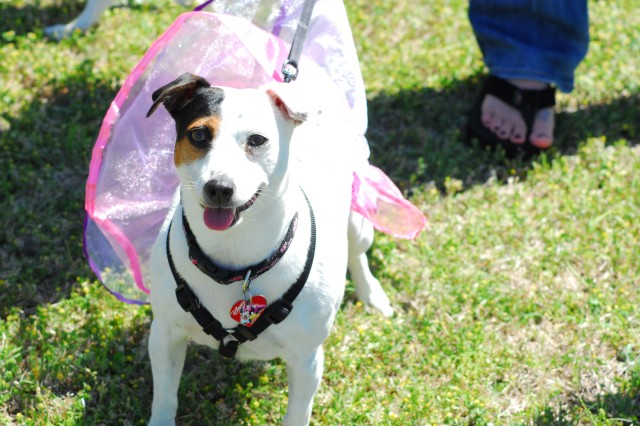 Dogs of all breeds and sizes competed in Sunday's April Fool-ish Dog Show, like this tutu-clad Jack Russel.