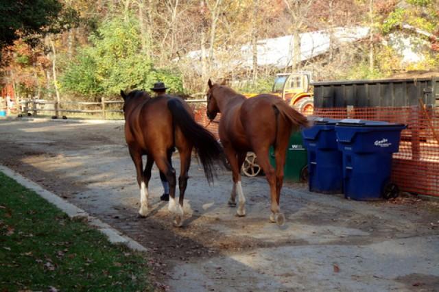 Horses wait for their riders at Rock Creek Park Horse Center, Washington, D.C.