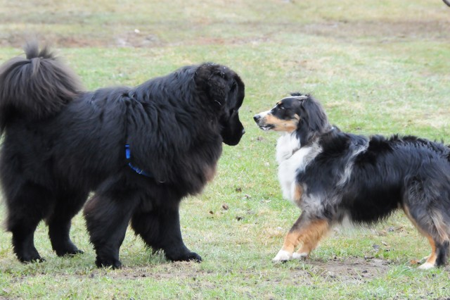 Two four-legged friends introduce themselves at the grand opening of the dog park on Rose Barracks, April 1. More than 40 people and pets attended.