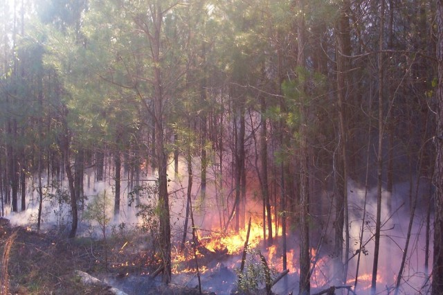 Controlled burns help environment, wildlife