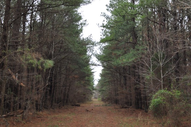 MILAN, Tenn. - One of Milan Army Ammunition Plant's many pine forests is nearly ready for a select cut. Around the age of 20, these trees will serve new purposes in various types of wood products.