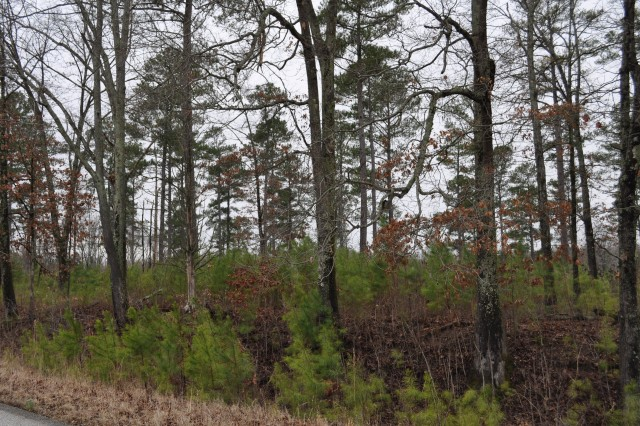 MILAN, Tenn. - An area of select-cut logging replenishes itself with new growth. Young pine trees naturally emerge in the gaps left by previous logging.