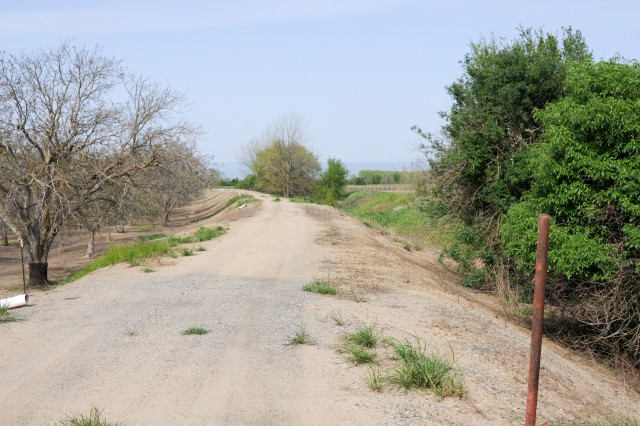 """The current, degraded levee known as the """"J levee,"""" separates privately owned orchards (left) and natural flood plain (right) near Hamilton City, Calif. A mature elderberry plant on the far right is home to the valley elderberry longhorn beetle, which has been listed as a federally threatened species since 1980."""