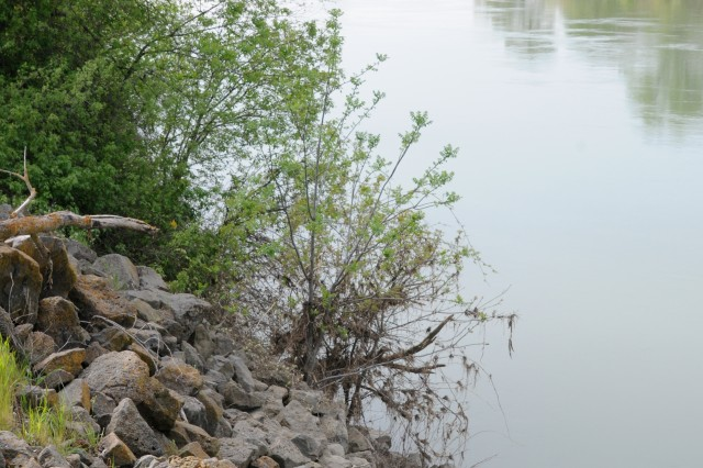A look upstream of the Sacramento River from a Hamilton City, Calif. shore. The rock pile (left) is from emergency levee repair circa 1995, said Jose Puente, Hamilton City Community Services District general manager.