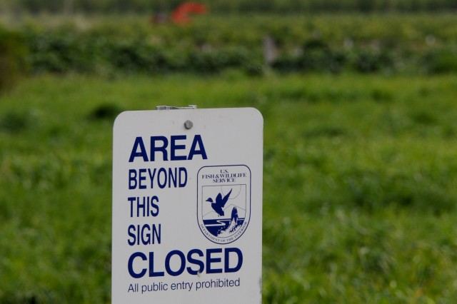A U.S. Fish & Wildlife Service sign guards public-restricted wetlands between the Sacramento River and private orchards in Hamilton City, Calif. The new setback levees will pass directly between these wetlands and the orchards.