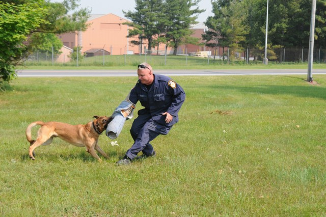 Slatan, a 5-year-old Belgian malinois, bites Officer Thomas Walsh's arm during a military working dog certification June 9. Slatan was tested on his ability to follow commands.