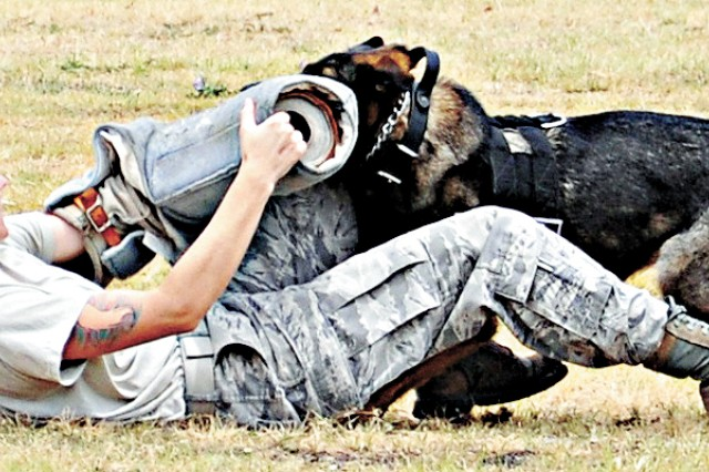 Military working dogs and their trainers provide a demonstration June 22 during the Summer Safety Day event at Fort Sam Houston.