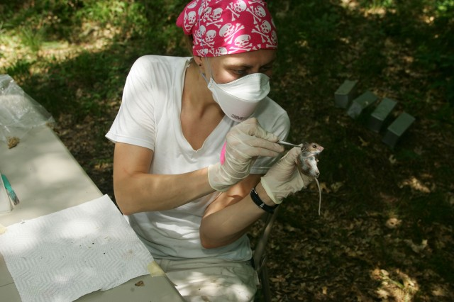 Isis Kuczaj, a graduate student from Michigan State University, checks for ticks on a small mammal at a Fort McCoy site.