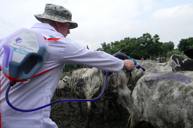 Chief Warrant Officer 2 Bryan Davis, a food safety officer from the U.S. Army National Guard's 949th Veterinary Company, sprays a cow with deworming formula July 16 while treating cattle at a humanitarian civic assistance site in Ablekuma-Matheko, Ghana, as part of MEDFLAG 11.