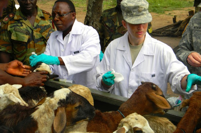 Dr. Elliot Francis Kwaku, a veterinarian from Ghana's 37th Military Hospital, and Maj. Katherine Knacke, the veterinarian officer-in-charge for the U.S. Army National Guard's 949th Veterinary Company, treat a pickup bed full of sheep for worms and mouth sores July 19 while working at a humanitarian civic assistance site in Doryumu, Ghana, as part of MEDFLAG 11.