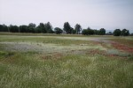 Corps awards record $4 million for wetland projects