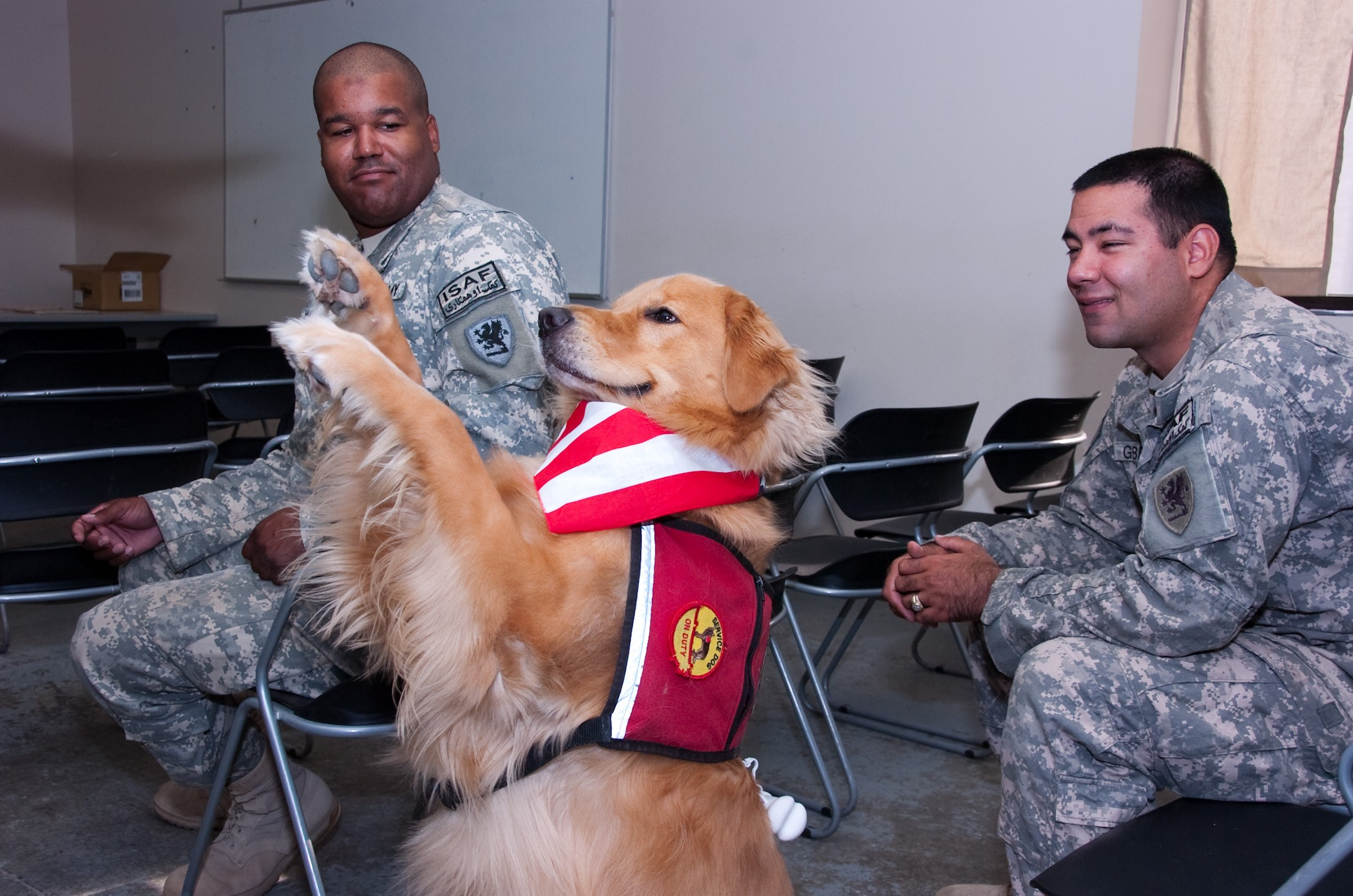 Therapy Dogs Help Demobilize Soldiers Article The United States Army
