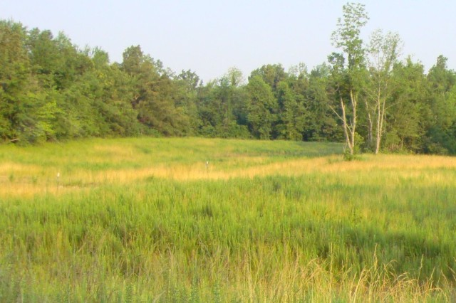 Native grasses are being used to protect a soil cover at the former Kentucky Ordnance Works in McCracken County, Ky.