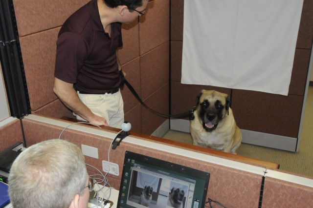 Jon Fishman helps Arnold, an English mastiff, get positioned for his new ID card Aug. 5, 2011. Arnold is a therapy dog and the newest member of the Army Substance Abuse Program on post.