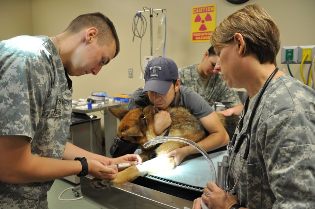 Lt. Col. Nicole Chevalier (right), Army veterinarian and chief of the Veterinary Specialist Branch, Department of Veterinary Science instructs animal care specialist student Pfc. Derek Lehane in administering an anesthetic induction drug in preparation for intubating a military working dog.