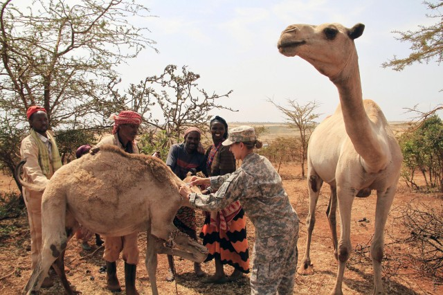 U.S. Army Capt. Jill Lynn, 490th Civil Affairs Battalion Functional Specialty Team veterinarian, and community animal health worker Mohammed Isaq (second from left) work together to treat a young camel during an eight-day Veterinary Civic Action Program in Negele, Ethiopia, Aug. 23, 2011.