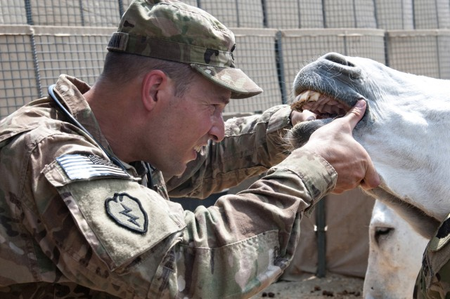 1-14th ADT vet inspects donkey's teeth in Afghanistan