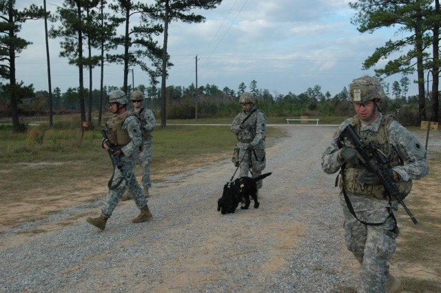 Rocky, a certified Tactical Explosive Detection Dog, moves out with a security patrol during training at Camp Shelby Joint Forces Center. TEDDs teams are currently training for an upcoming deployment at Camp Shelby Joint Forces Training Center. The training is unique in that it is the first time TEDDs have actually been a part of a unit's collective training prior to deployment.