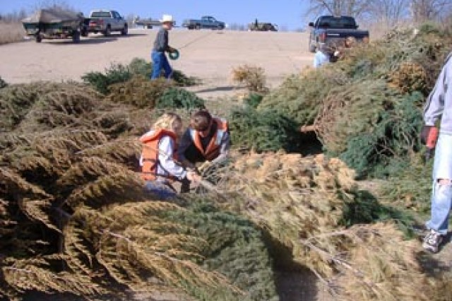 Volunteers gather used Christmas trees to create fish habitats at St. Louis District, U.S. Army Corps of Engineers Lakes. (Photo by St. Louis District, U.S. Army Corps of Engineers)